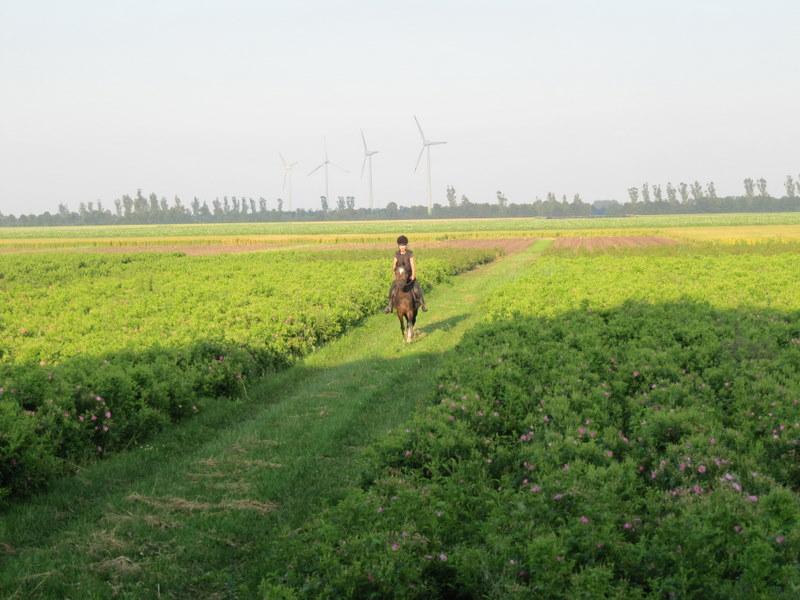 Paardrijden op de kwekerij